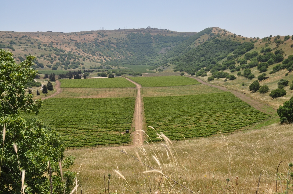 Golan Heights Winery Tour