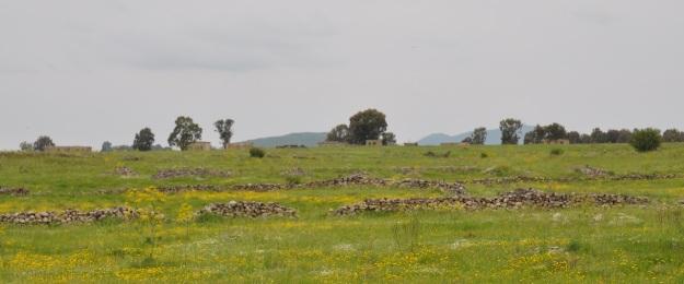 Golan landscape
