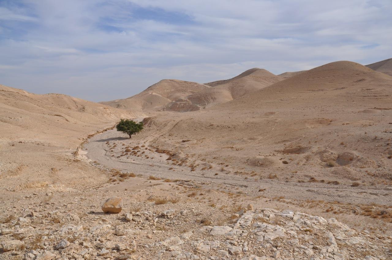 Lone Tree Near Wadi Qelt