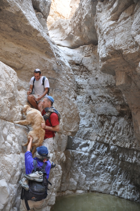 Climbing rungs