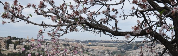 cropped-almond-blossom-jerusalem1.jpg
