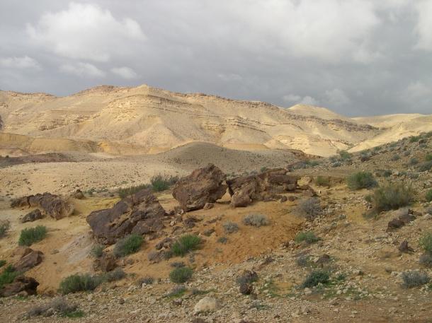 Petrified tree, Large Makhtesh