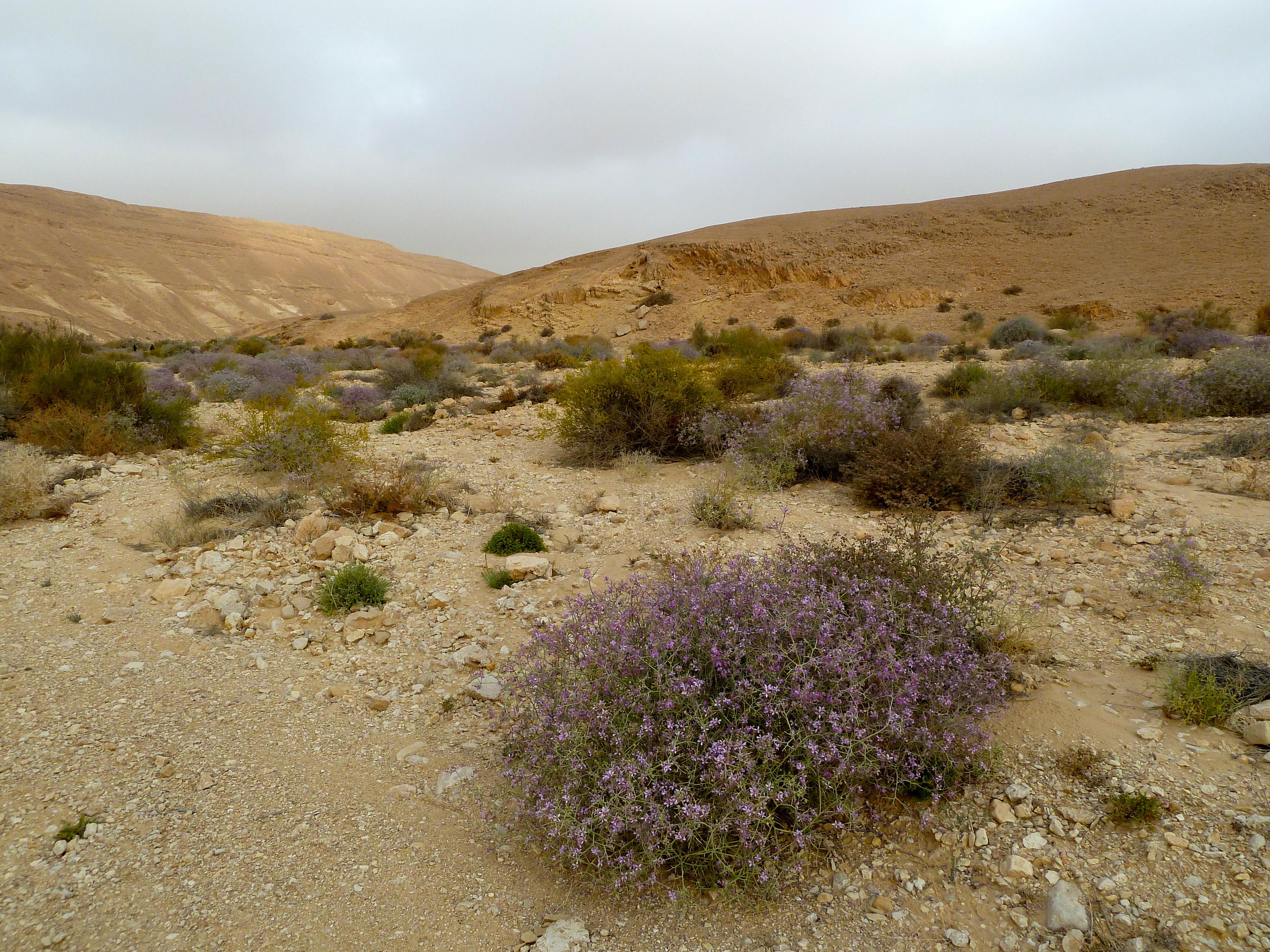 Desert israel tour guide israel tours page 2 for Desert landscape