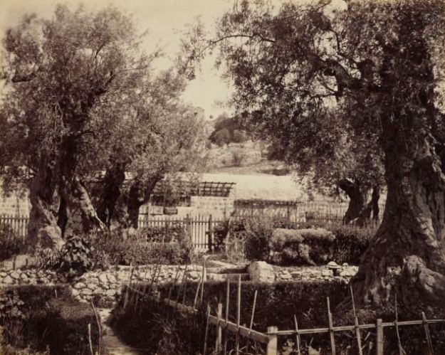 Garden of Gethsemane, 1862 Francis Bedford