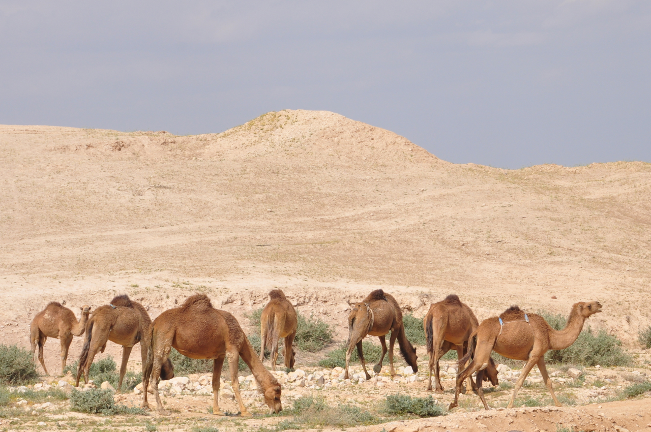 Judean Desert Israel Tour Guide Israel Tours