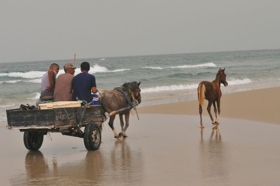 Horses wagon beach