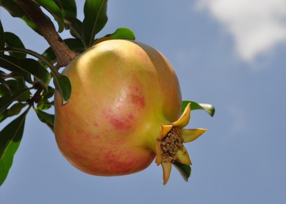 Pomegranate sky