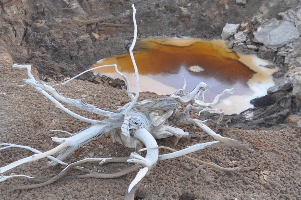 Sinkhole driftwood