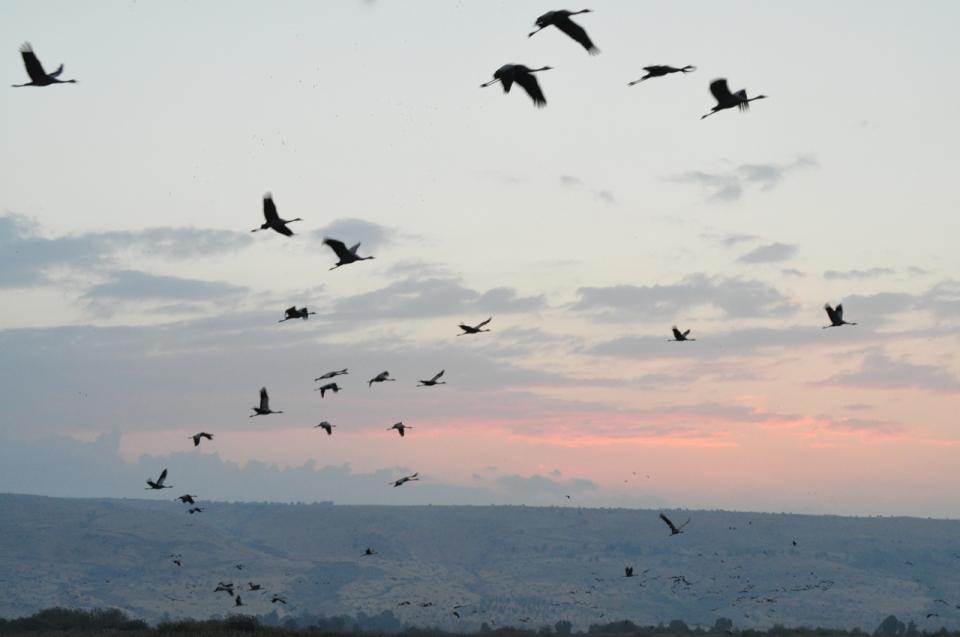 Cranes lift off