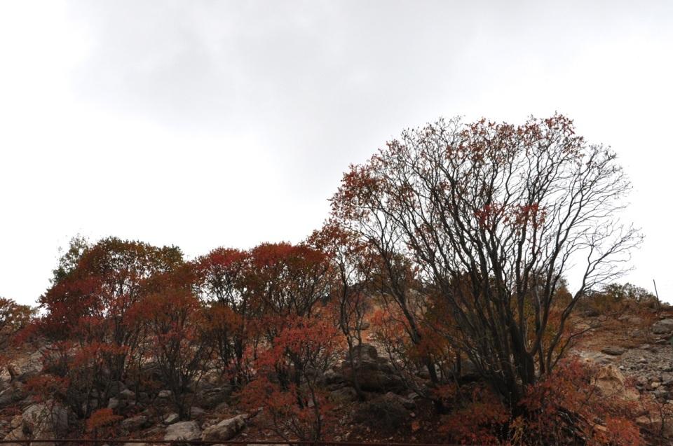 Hermon Autumn foliage
