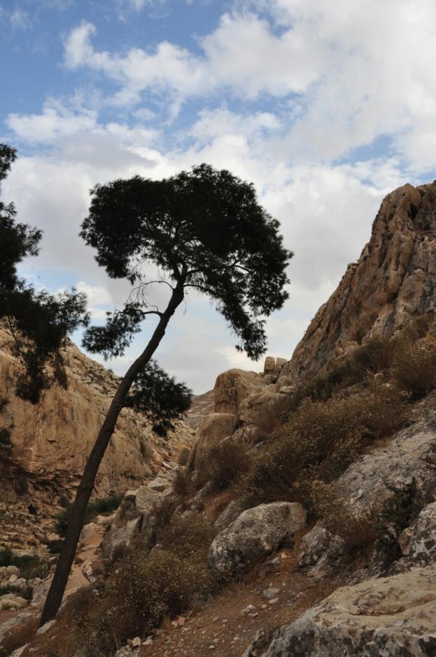 Pine Ein Prat
