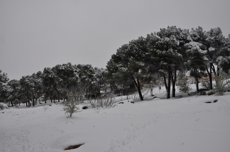 Hursha in snow