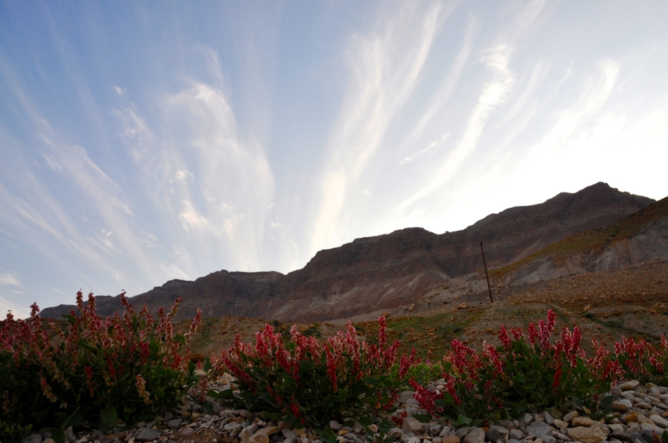 Flowers in Judean Desert