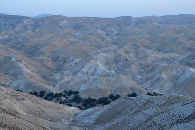 Green of Wadi Qelt ISO 250 42mm f/8 1/60 sec.
