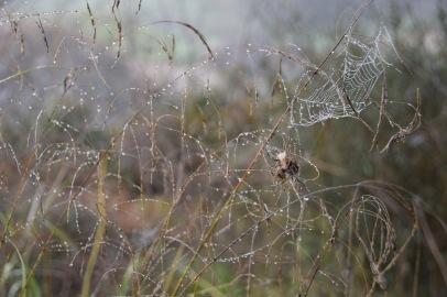 Spiderweb Nahal Soreq