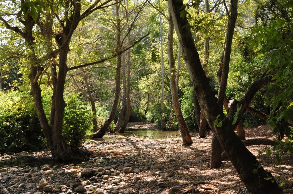 Forest, Achziv