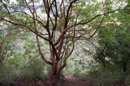 Katlav in woods
