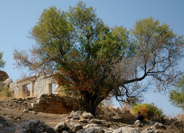 Meron synagogue September