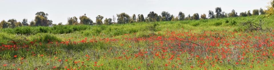 kalaniot_panorama